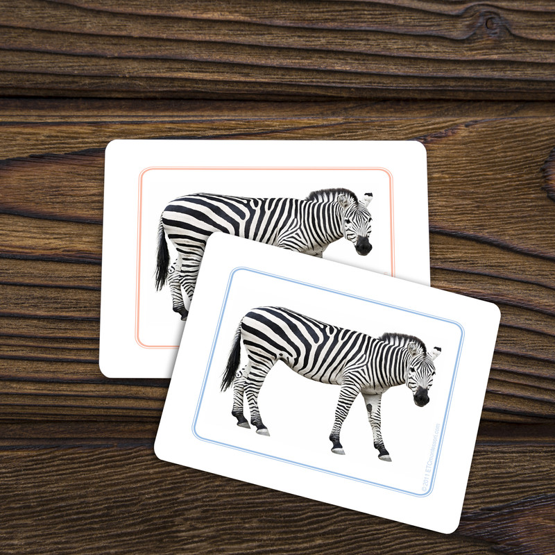 African Animals - Matching Cards (EC-0428B)