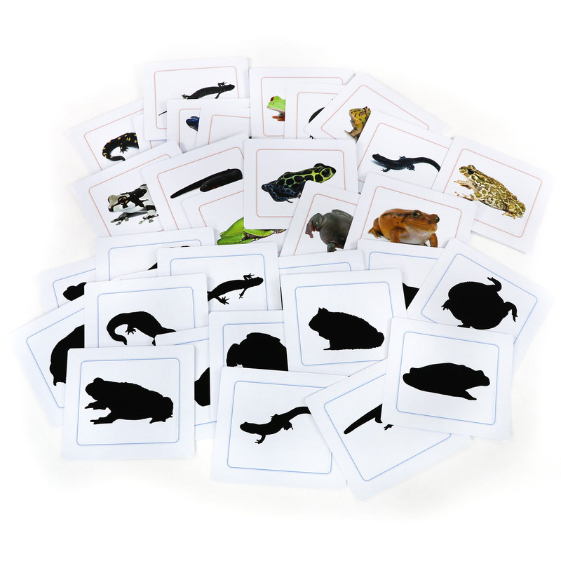 Amphibians Silhouettes - Matching Cards