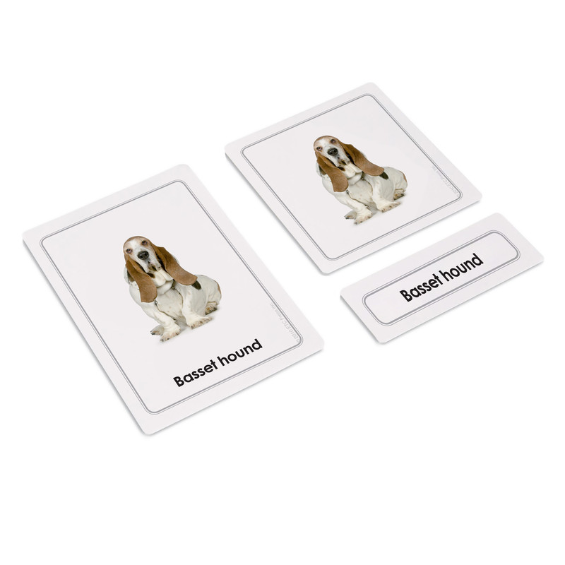 Dogs 3 Part Cards Kit I (EC-0420A)
