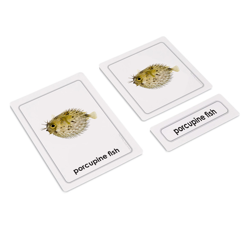 Fish 3 Part Cards (EC-0415A)