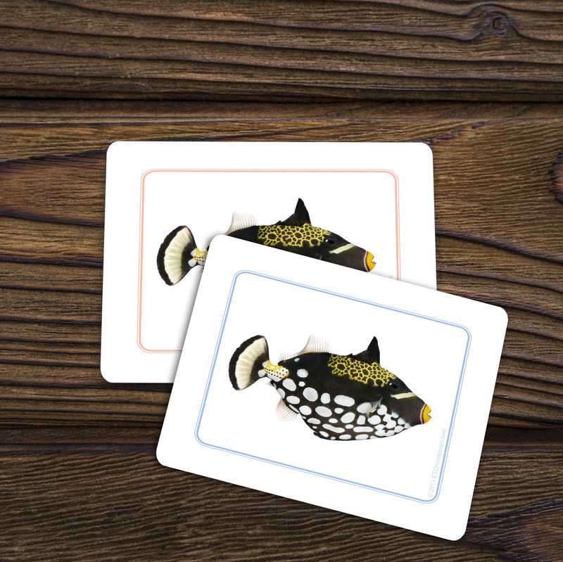 Fish - Matching Cards (EC-0415B)