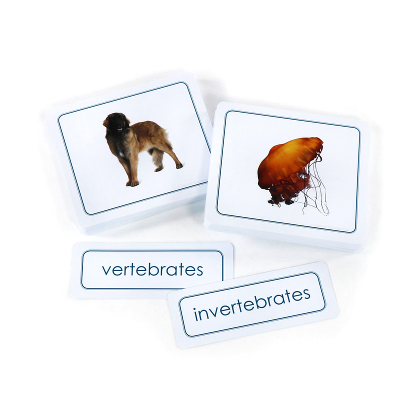 Vertebrates and Invertebrates Sorting