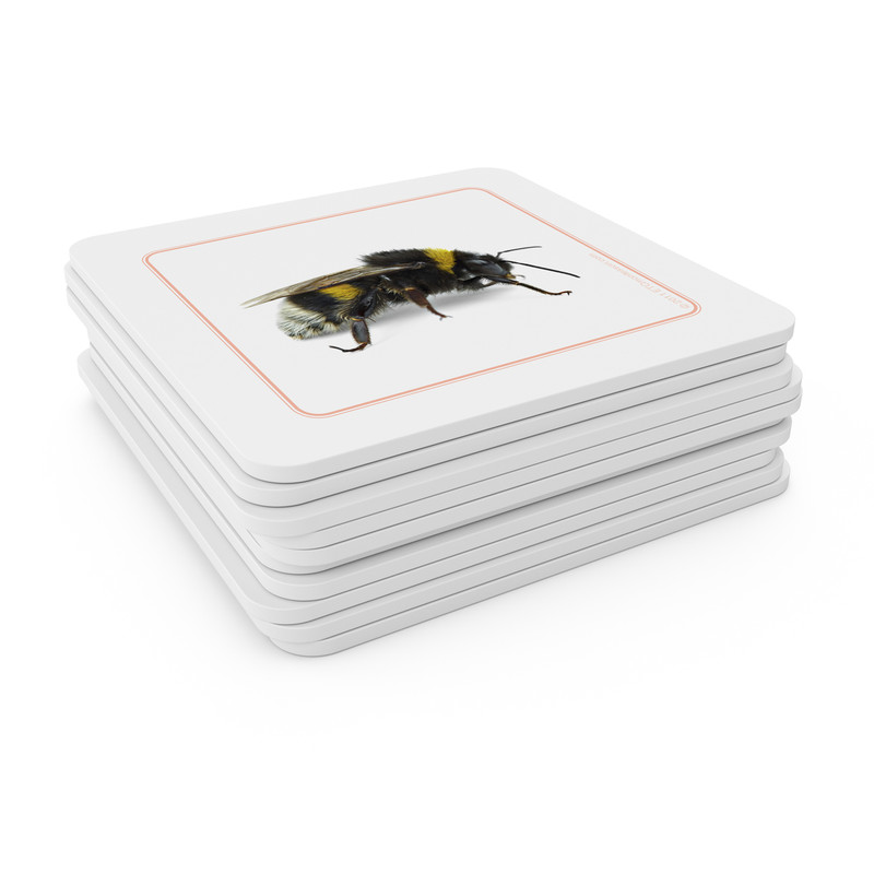 Invertebrates - Matching Cards (EC-0450B)