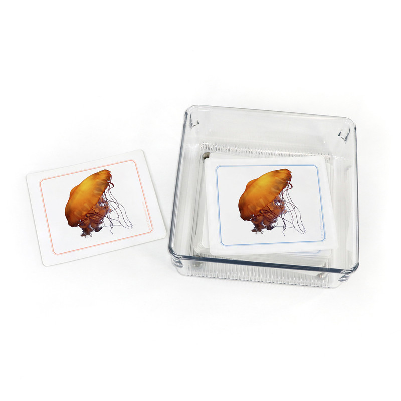 Invertebrates - Matching Cards (EC-0450B) with container