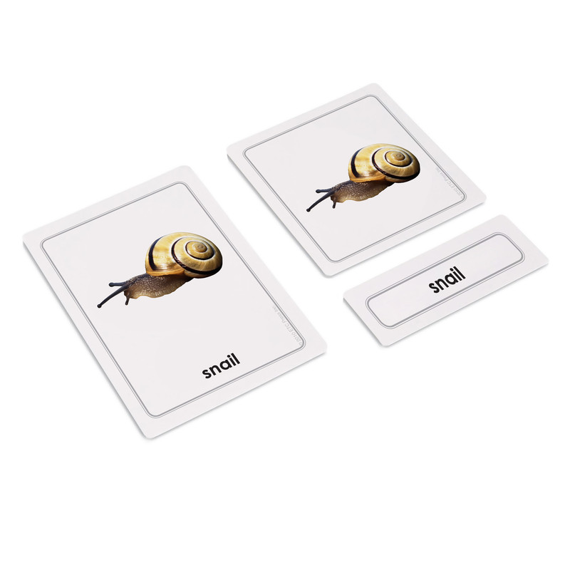 Mollusks 3 Part Cards (EC-0445A)