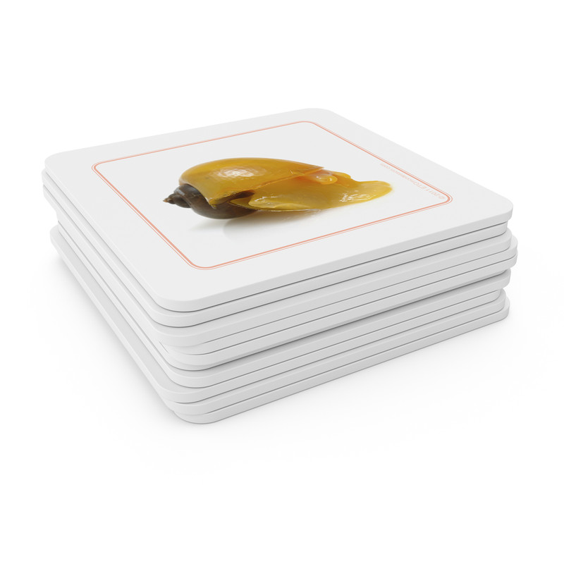 Mollusks - Matching Cards (EC-0445B)