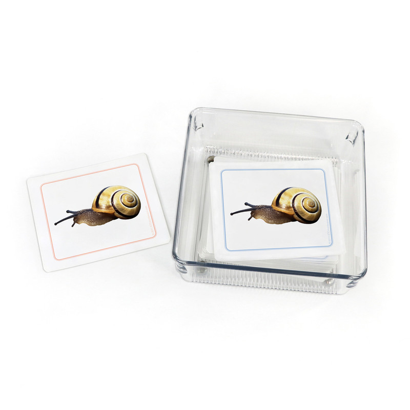 Mollusks - Matching Cards (EC-0445B) with container