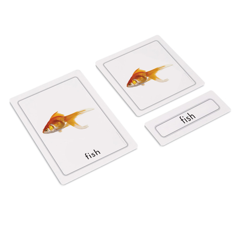 Parts of a Fish 3 Part Cards (EC-0459)