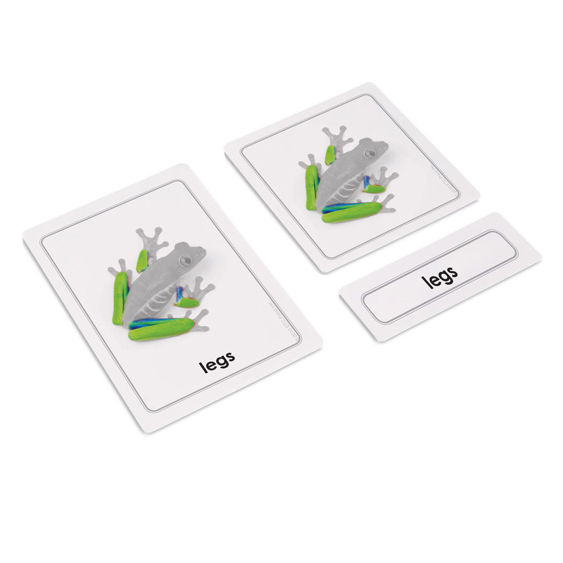 Parts of a Frog 3 Part Cards
