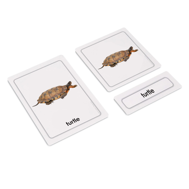 Parts of a Turtle 3 Part Cards