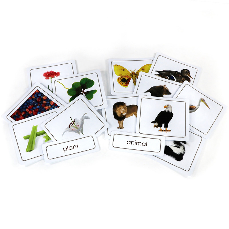 Plants and Animals Sorting