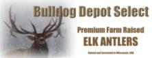 bd-antlers-bc.jpg