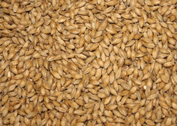 10 Lb German Pilsner Malt (Best Malz)