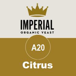 A20 - Citrus