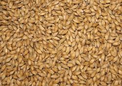 Barke Pilsner Malt   1-Lb