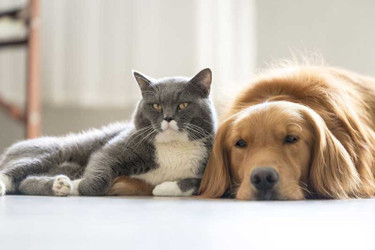 CBD for Pets: Cats and Dogs