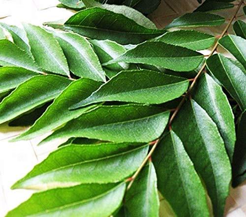 Curry Leaf each