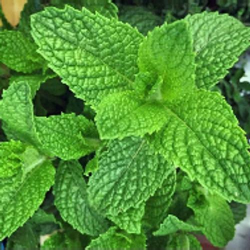 Mint Leaves each
