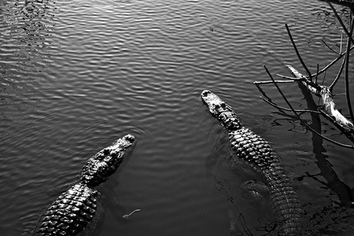 Alligator Hunters