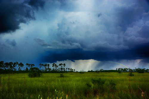 Everglades Rainbow