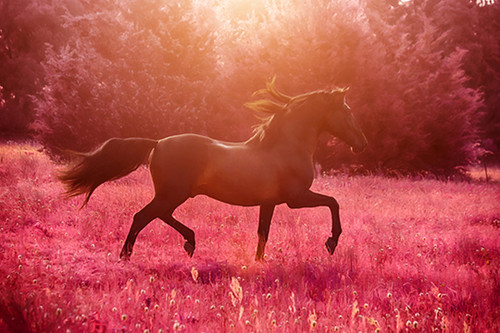 Andalusian Pink