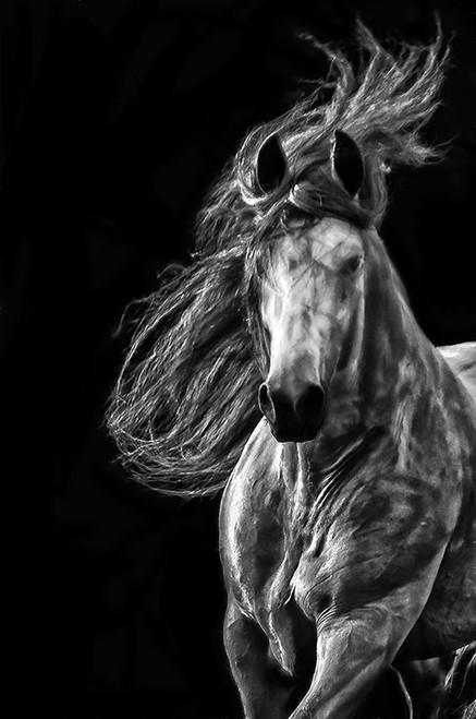 Striking Stallion