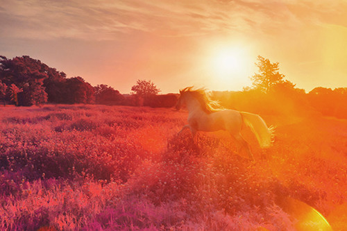 Equine Dreaming