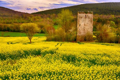 Glory In Yellow