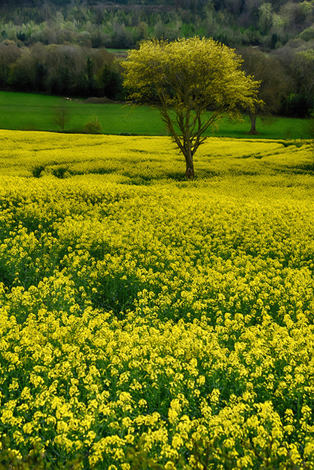Tree Among The Yellow