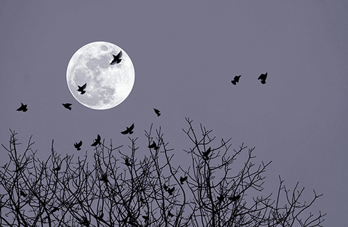 Birds By The Moon