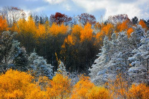Snowy Yellow