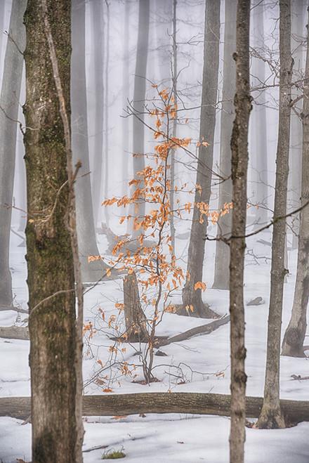 Orange Within The Fog