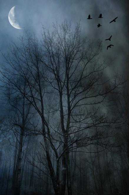 Foggy Crows