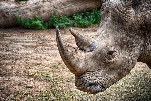 Rhino Wrinkle