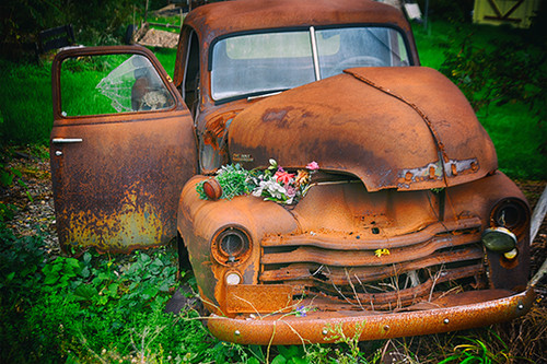 Flowers On The Rust