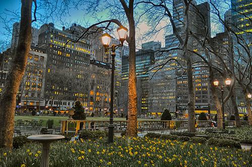 Daffodil City