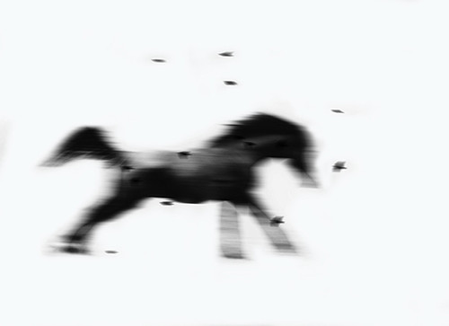 Equine In Motion