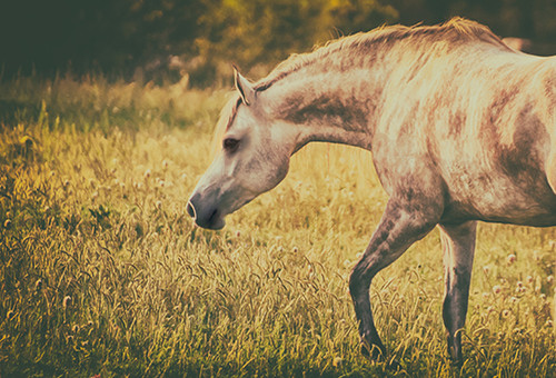Pastel Arabian