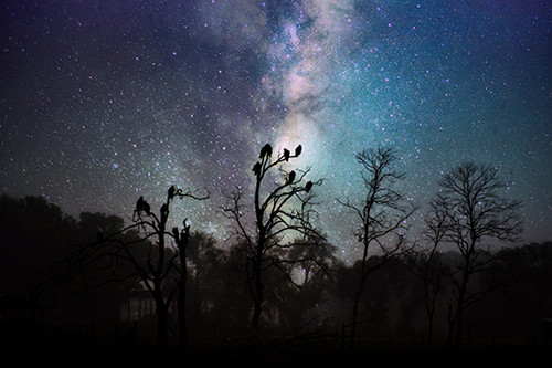 Galaxy Vultures