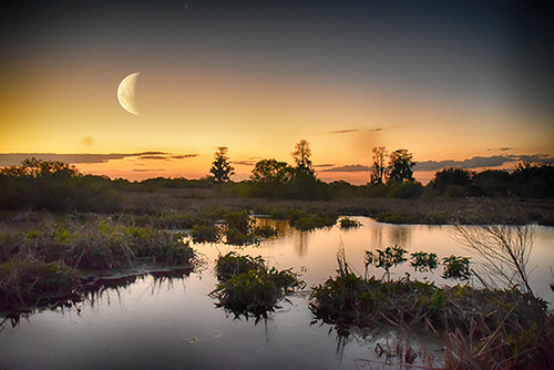 Everglades Moon