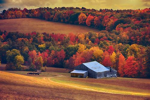 Autumn Reminisce