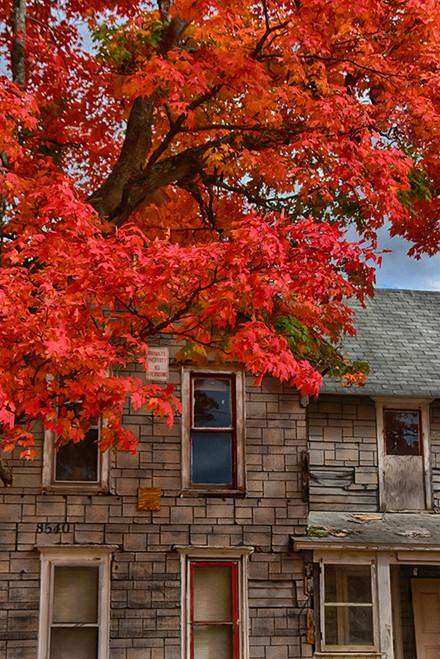 Autumnal Stories
