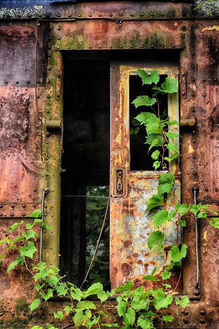Ivy N Rust