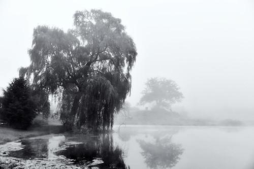 Melancholy Willow