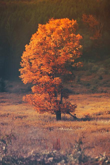 Autumn Orangecicle