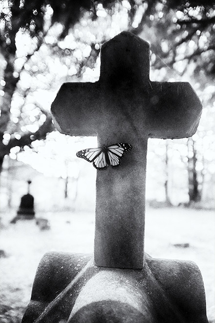 Stoned Butterfly
