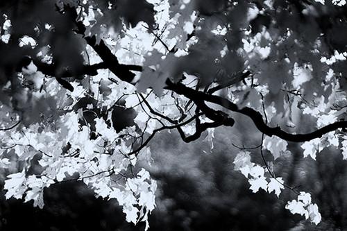 Twisted Foliage
