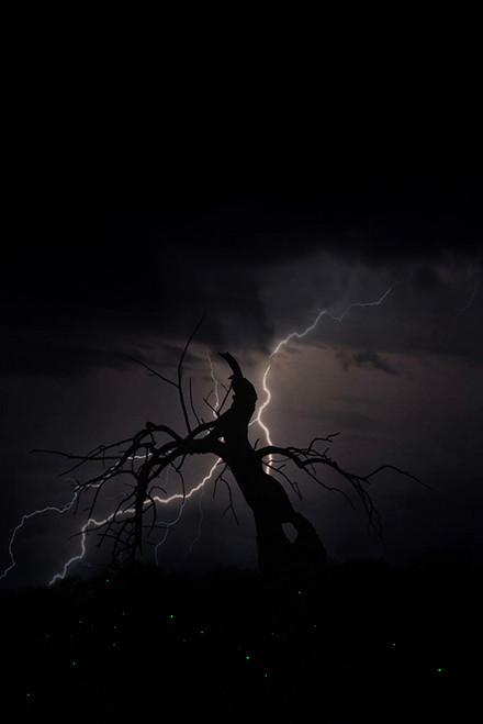 Electric Fireflies