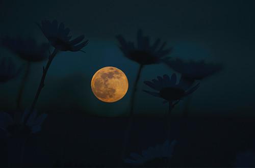 Moonlight Wildflowers