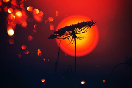 Queen's Sunset